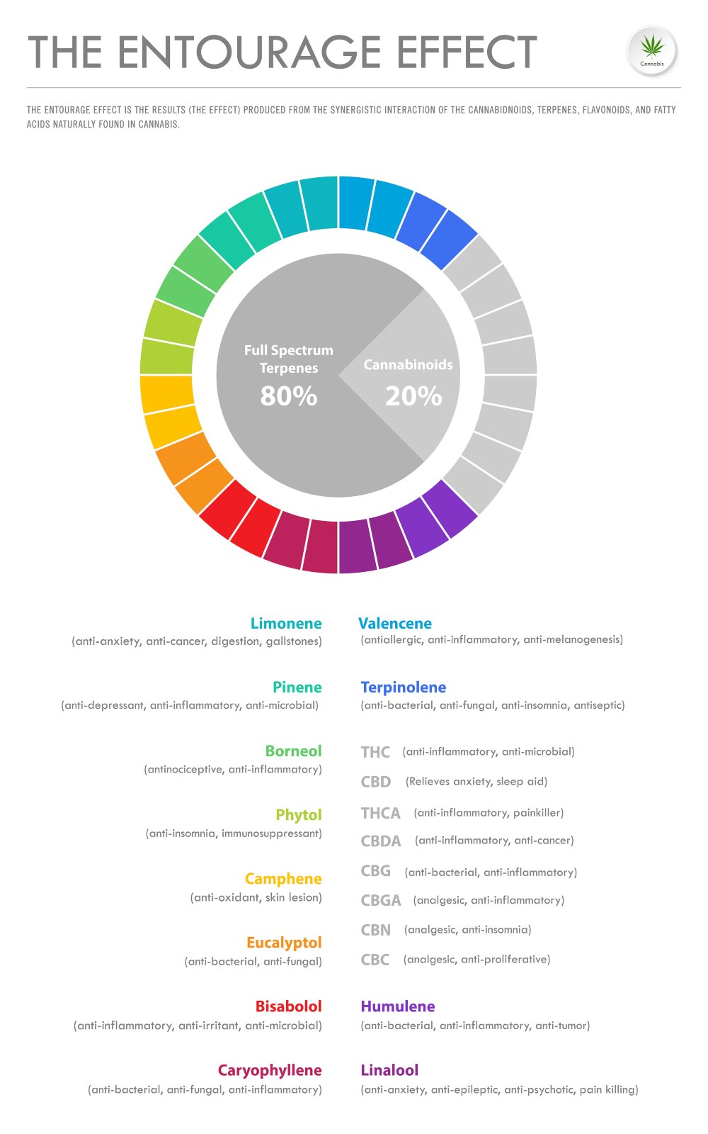 The Entourage Effect Proportion vertical business infographic illustration about cannabis as herbal alternative medicine and chemical therapy, healthcare and medical science vector.