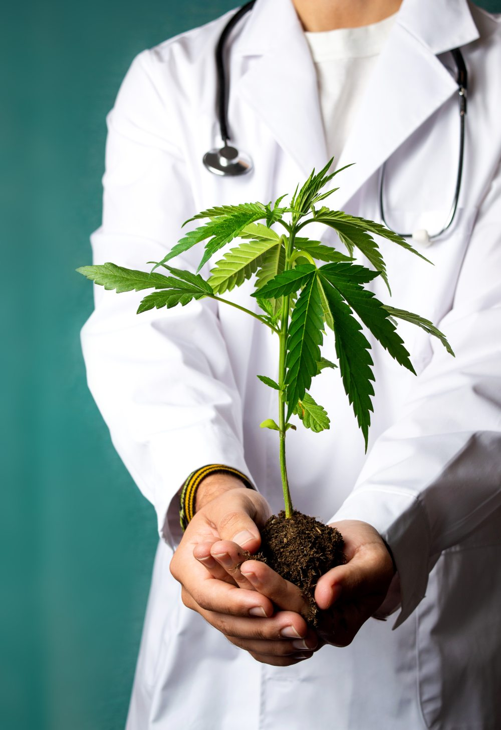 Doctor holding cannabis plant