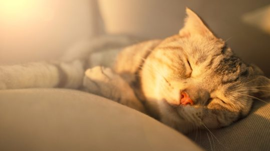 cute cat sleeping on the couch